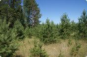 Иванов лес