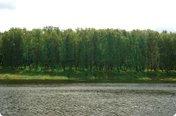 Петровское (Вишневый сад) продан