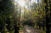 Крюковские леса