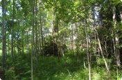 Лесной (Новорижское)
