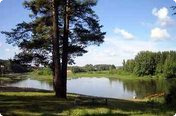 Дубравский лес (продан)